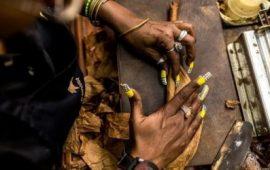 Cách phân biệt thuốc lá điếu, xì gà, thuốc lào và chất gây nghiện (P1)