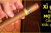Truy tìm tận gốc nguyên nhân khiến xì gà bị mọt