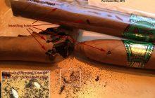 Hướng dẫn cách xử lý hiệu quả khi xì gà bị mối mọt tấn công